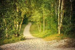 Pathway through a green forest Royalty Free Stock Photos