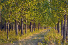 Pathway in green forest Royalty Free Stock Images