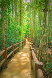 Pathway in green forest Royalty Free Stock Photo