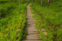 Pathway Stock Images