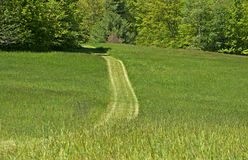 Pathway through the green grass Royalty Free Stock Image