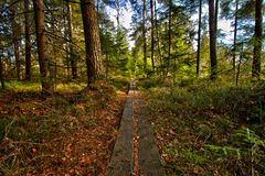 Pathway through the green Royalty Free Stock Photo