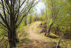 Pathway through green trees in spring season Stock Photo