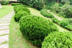 Pathway among greenery lawn with ornamental trees in outdoor garden Royalty Free Stock Image