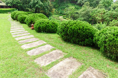 Pathway among greenery lawn with ornamental trees in outdoor garden Stock Photography