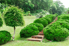 Pathway among greenery lawn with ornamental trees in outdoor garden Stock Images