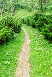 Pathway among greenery lawn with pine bush in outdoor garden Stock Photos