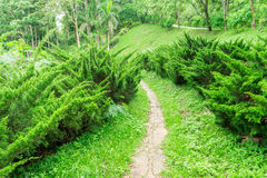 Pathway among greenery lawn with pine bush in outdoor garden Royalty Free Stock Photos