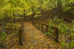Pathway through hardwood forest in autumn. Stock Photo