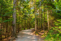 Pathway in the Hopewell Rocks park Royalty Free Stock Photo
