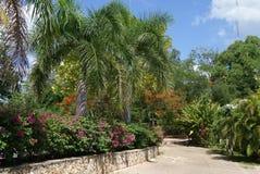 Pathway in Ik Kil Park, Yucatan, Mexico Stock Photos