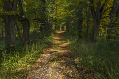 Pathway In Autumnal Park Stock Photo