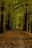 Pathway In Forrest Royalty Free Stock Photos