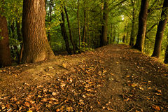 Pathway In Forrest Stock Image