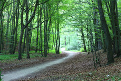 Pathway In Green Forest Nature Scenic Royalty Free Stock Image