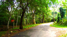 Pathway in Indian forest Stock Image
