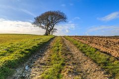 Pathway through Fields. A pathway through Isle of Wight farmland, taken on a sunny winters day Stock Image