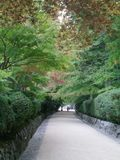 A pathway through Japanese maples. A pathway bordered by stone walls and hedges. Japanese maples with autumn leaves overhang the path. A stone lantern stands at Stock Images