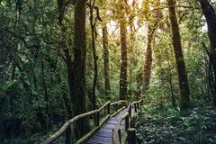 Pathway of a journey jungle in Doi inthanoon Stock Image