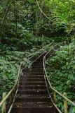 Pathway through the jungle. Forest Royalty Free Stock Photo