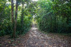 Pathway in the jungle. Path in the jungle of Bastimentos island ,Caribbean, Panama Stock Photos