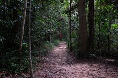 Pathway in the jungle surrounding with nature stock images