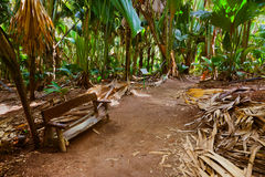 Pathway in jungle - Vallee de Mai - Seychelles stock image