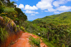 Pathway in jungle - Vallee de Mai - Seychelles. Travel background royalty free stock photography