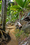 Pathway in jungle. Vallee de Mai, Seychelles - travel background stock photography