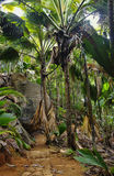 Pathway in jungle royalty free stock images