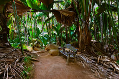 Pathway in jungle - Vallee de Mai - Seychelles. Pathway in jungle - Vallee Mai - Seychelles - travel background royalty free stock photos