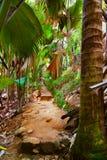 Pathway in jungle - Vallee de Mai - Seychelles. Travel background stock photo