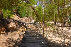 Pathway in jungles Stock Photography