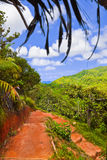 Pathway in jungles, Vallee de Mai, Seychelles. Travel background royalty free stock photo