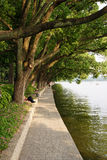 Pathway by lake. Scenic view of pathway under overhanging trees by lake Stock Photo