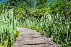Pathway in lake Royalty Free Stock Image