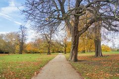 Pathway with leafless tree in Hyde Park London in autumn. Pathway with leafless trees in Hyde Park London in autumn Stock Images
