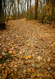 Pathway of leaves in the fall Stock Photography