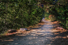 Pathway of Life. Well-worn path in forested area Royalty Free Stock Photography