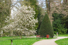 Pathway, magnolia flowers and trees in sunny garden or park, springtime Royalty Free Stock Image