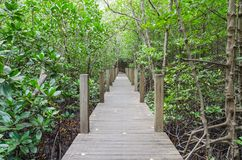 Pathway in mangrove forest Stock Photos
