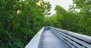 Pathway through mangroves shot with gimbal stabilized camera cinema 4k