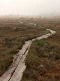 Pathway in marsh Stock Photography