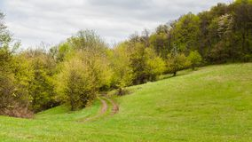Pathway through the meadow. Country lane through meadow on edge of the woods Royalty Free Stock Images