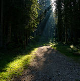 Pathway in Middle of Forest Outdoors during Daytime Royalty Free Stock Images
