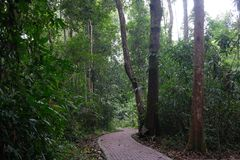 Pathway in the middle of jungle royalty free stock photo