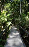 Pathway in the middle of tropical forest Stock Images