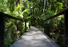 Pathway in the middle of tropical forest Stock Photography