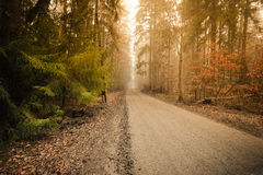 Pathway through the misty autumn forest stock photos