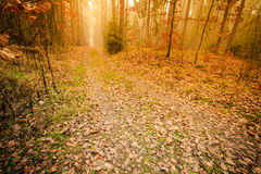Pathway through the misty autumn forest royalty free stock photos